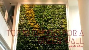 Top 10 Greens for A Green Wall
